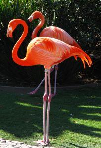 significado de flamingo significado dos símbolos dicionário de
